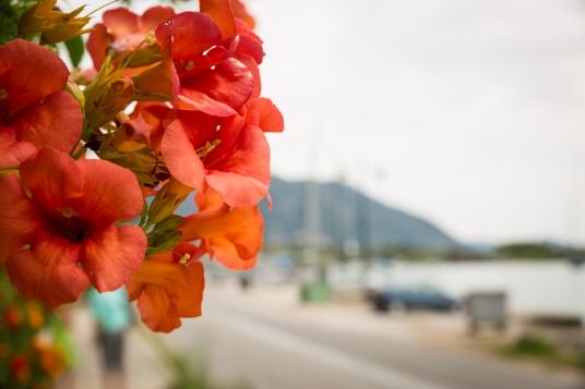 Nidri, Greece-0784