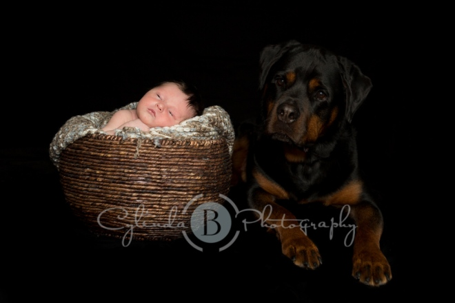 Rottweiler, newborn, photography, family