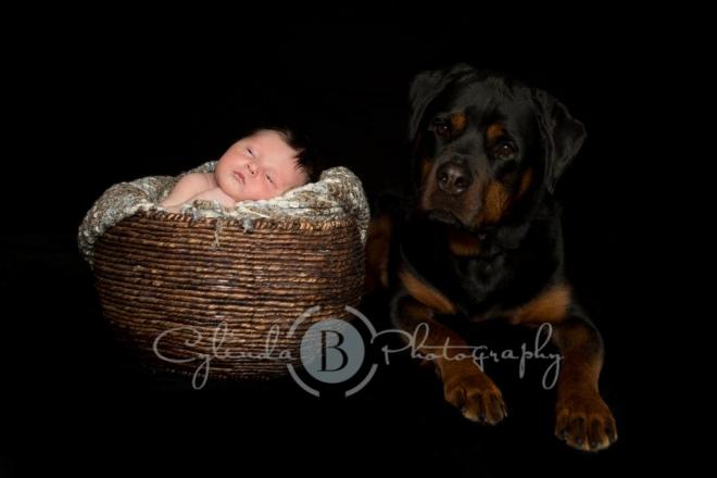 Rottweiler, newborn, photography, family