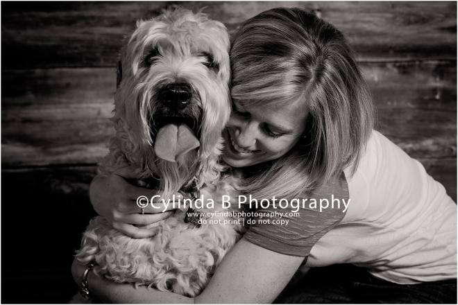 soft coated Wheaten Terrier, pet photography, syracuse ny, dog, portraits, cylinda b photography, family