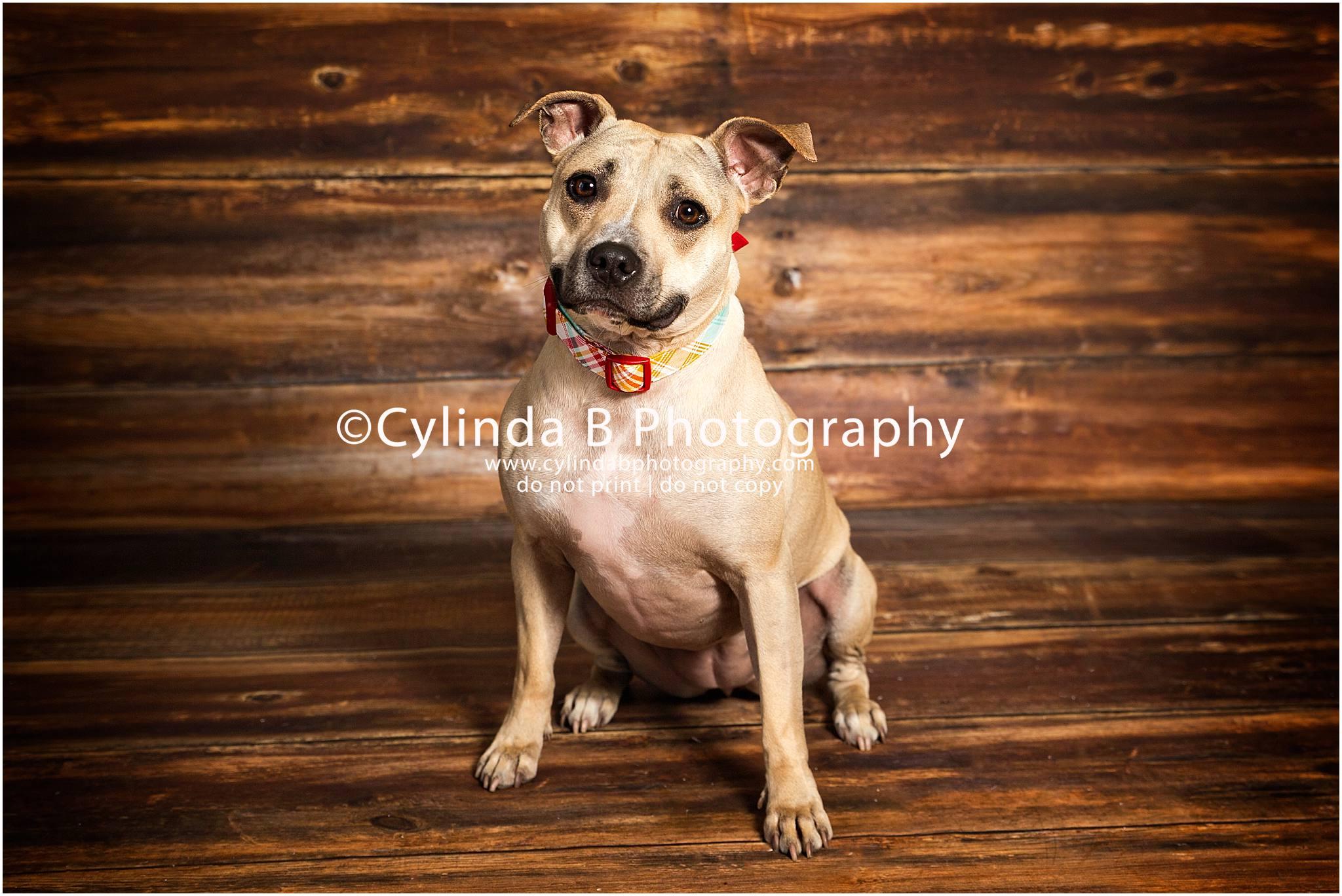 Dog Show In Syracuse Ny